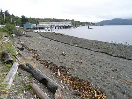 The beach at Alert Bay, BC, where the last great act of cultural genocide was carried out by white men against the art and regalia heritage of Aboriginal peoples, in 1921. The NMHS is at the core of an unprecedented assault on legitimate art of Canada's top Aboriginal artist.