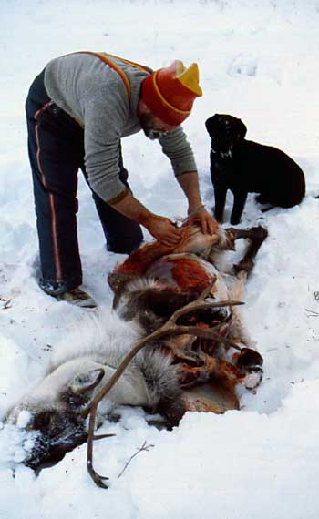 For six years that we lived in remote arctic and sub-arctic Aboriginal villages, I shot all our meat (caribou, moose, swans, geese, ptarmigan) usually in Dene and Inuit hunting parties that went out for several days at a time, often at 30 and 40 below. By the end I could butcher an entire moose myself.